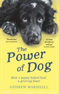 Buy The Power of Dog on Amazon UK