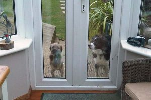 Flash and Onion waiting to be let in
